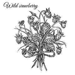 Bouquet of wild strawberry. Sketch. Engraving style. Vector illustration.