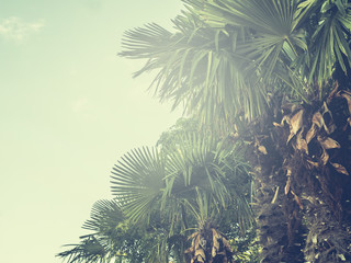 vintage style toned palm trees with copy space on the sky