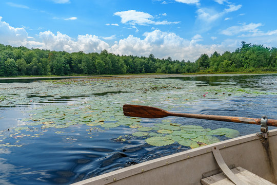 Boat floating for travelers and water lily in lake