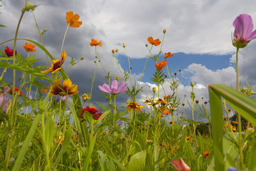 Multicolored wildflowers on spring day