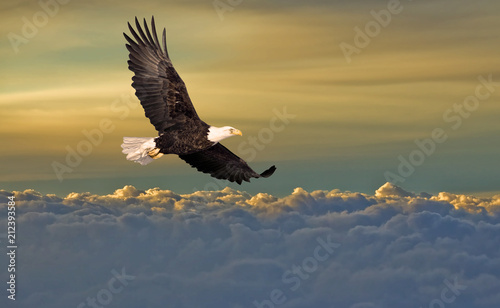 Fototapete Bald eagle flying above the clouds