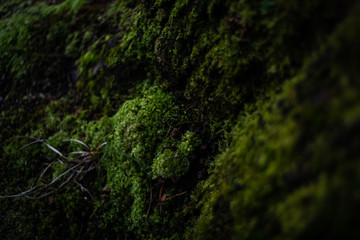 Moss on the stump of a tree in the shadows of a forest