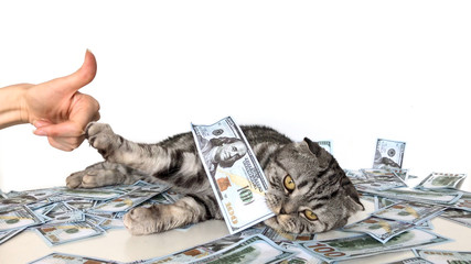 Cat stabbed the claw into the finger. Cat is holding a dollar bill in the mouth and is lying on the money.
