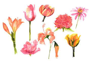 Set of watercolor flowers on white background, rose, tulip, zinnia, hibiscus and amaryllis