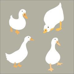 duck white set vector illustration flat style