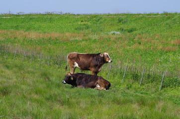 牛のいる牧場