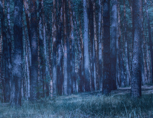 forest glade at night is illuminated by the mysterious moonlight