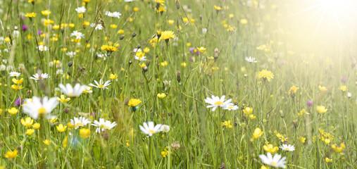 Frühlingswiese mit Sonnenstrahlen