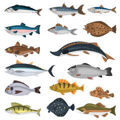 Commercial fish of the world color icons set isolated on white