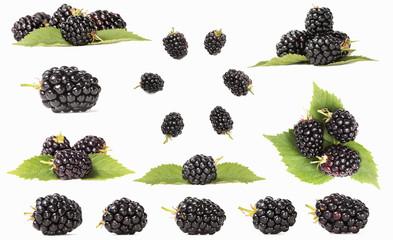 blackberry. blackberries. berries. black berry fruit. blackberry on white