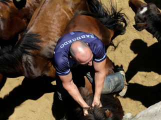"A reveler tries to hold on to a wild horse during the ""Rapa das Bestas"" traditional event in the village of Sabucedo"