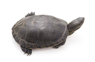 One big turtle.