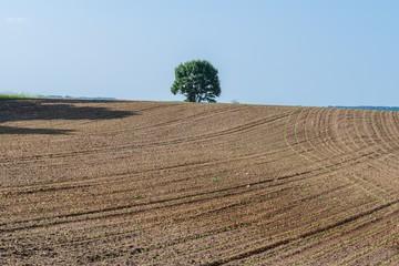 Ein Baum auf einem Ackerfeld