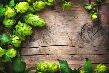 Hop twig over old wooden cracked table  background. Beer production ingredient. Brewery concept