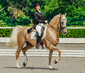 Elegant rider woman and cremello horse. Beautiful girl at advanced dressage test on equestrian competition. Professional female horse rider, equine theme. Saddle, bridle and other details.