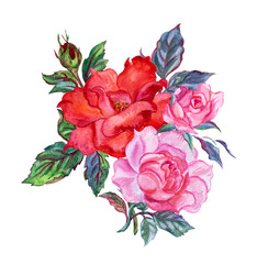 Bouquet of roses, watercolor drawing on white background, isolated.