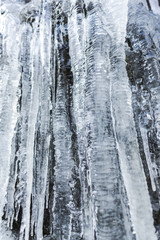 Garden Poster Birch Grove Icicles on the rocks inside of the forest