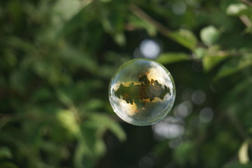 soap bubbles on the grass