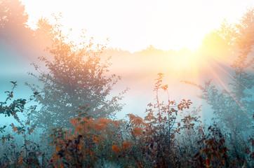 autumnal foggy sunrise landscape. Dry grass, fog