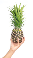 hand holding pineapple isolated on white background
