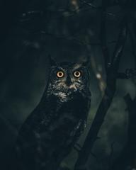 Night eyes.