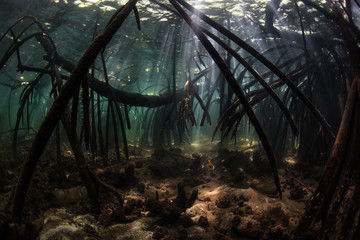 Fototapete - Dark Mangrove and Beams of Light in Komodo National Park