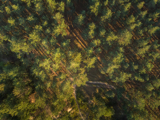 Coniferous forest - top view