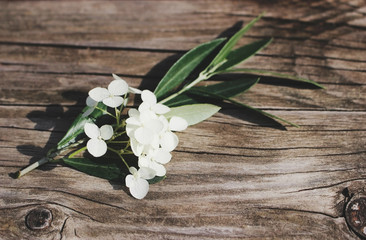 Styled stock photo. Feminine floral still life composition. Closeup of green olive branch and white hydrangea flowers lying on the old wooden table. Vintage design, blurred background.