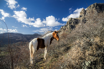 A horse is grazing in the mountains. Mountain range Demerdzhi, the Republic of Crimea.