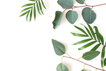 Styled stock photo. Jungle composition of green palm and eucalyptus leaves isolated on white background. Tropical summer holiday, vacation concept. Flat lay, top view.