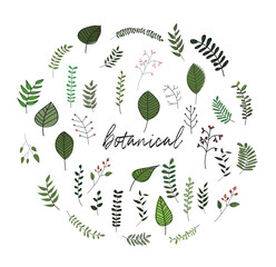 vector botanical doodles illustration elements. hand drawn drawing sketch. leaves leaf grass rowan