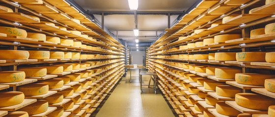 shelves with cheese at a cheese warehouse
