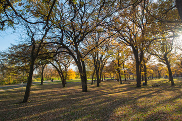 Yellow Fall Park