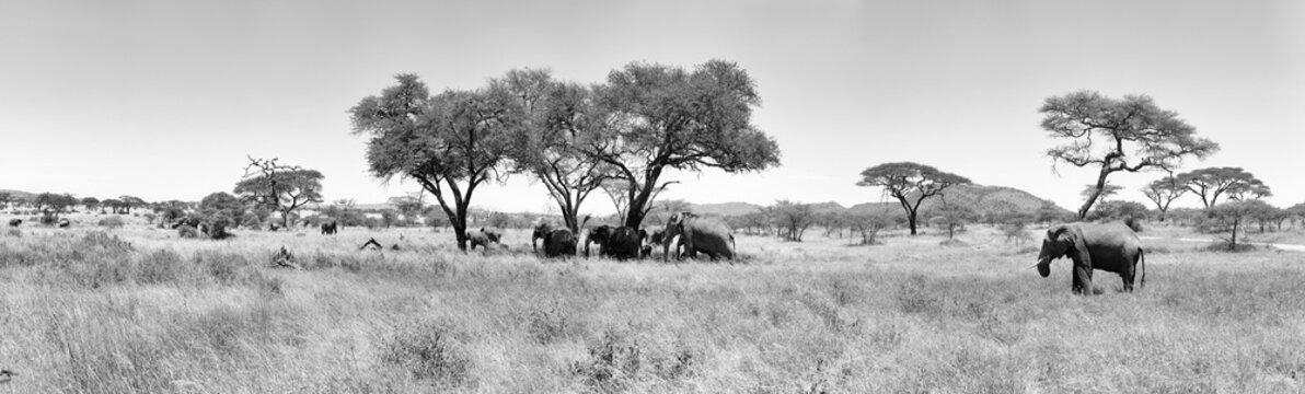 Lions Elephants Cheetah Elephant Eland Sergeneti Zebra Giraffe NgoroNgoro Ndutu Wildebeast Migration