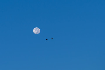 Full moon and birds flying.