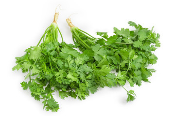 Cilantro with stalks, leaves and root on a white background