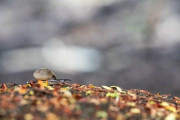 an beautiful nice snail