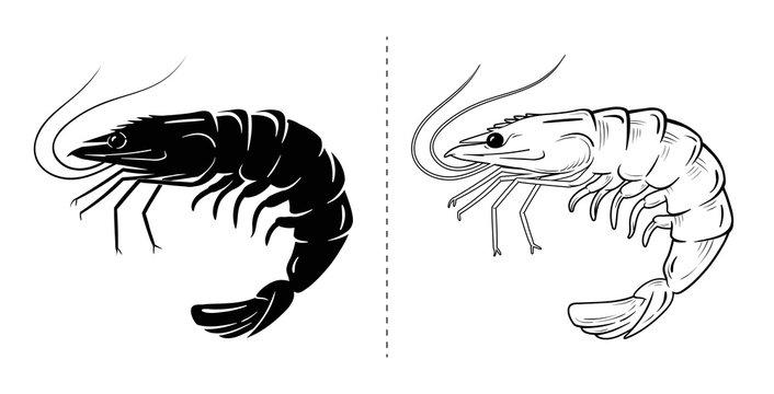 Shrimp silhouette sea animal. Vector sketch illustration.