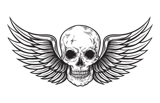 Skull and wings in engraving style. Vector illustration