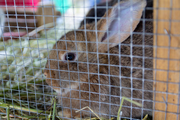 Pedigree rabbit sits in a cage. Farm