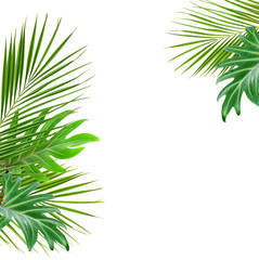 Green palm branches and monstera leaves