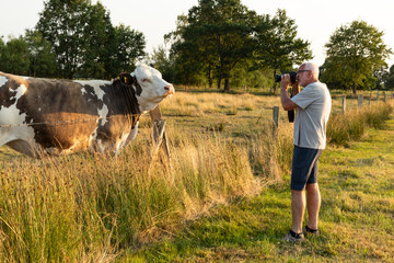 Man takes a picture of a cow