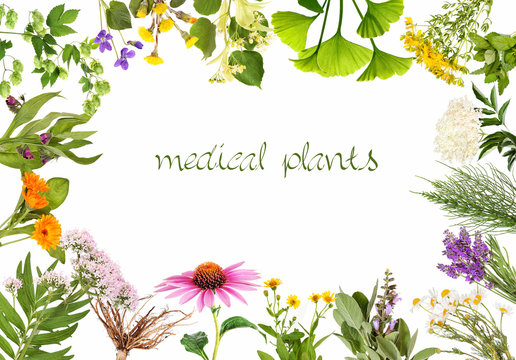 Frame with medical plants