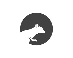 squirrel logo and symbols
