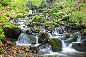 Stream in a mountain forest.