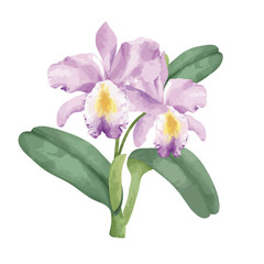 Hand drawn pink orchid flower