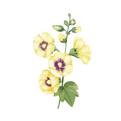 Hand drawn yellow hollyhocks flower illustration