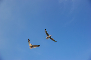 Seagulls are flying