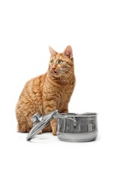Hungry ginger cat stealing food from a cooking pot.