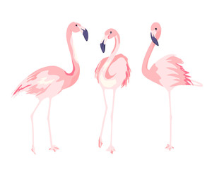 Flamingos. Isolated vector illustration